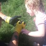 rescuing baby ducks
