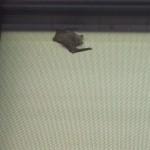 bat inside a school